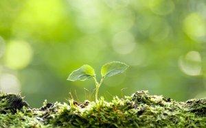 wschodząca roślina